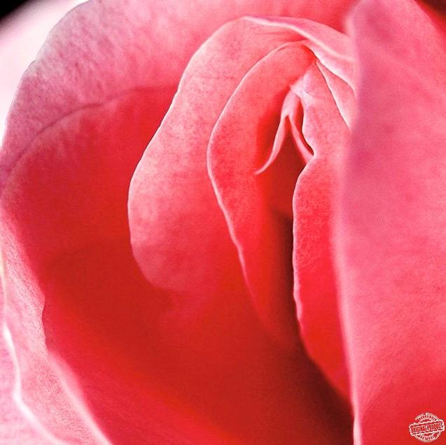 Rosa Vagina
